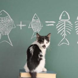 지금까지 사람들이 잘 몰랐던 고양이의 인지능력 6