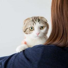 고양이가 마음을 연 사람한테만 하는 행동