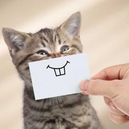 고양이가 좋아하는 집사 말 5