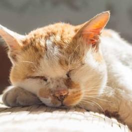 내 고양이가 나이 들었다는 신호 8