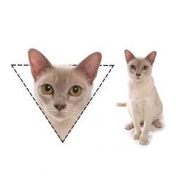 사각형은 고양이 계의 리트리버, 고양이 얼굴형에 따른 성격진단
