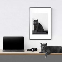 집사, 매일 7장씩 찍고 인간보다 고양이와 있는 게 편안