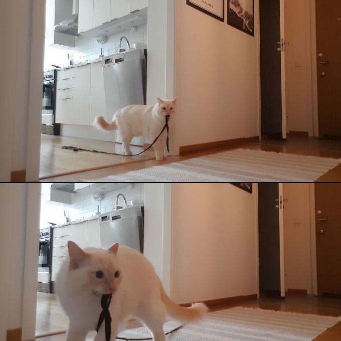 집사가 집에 없으면 고양이는 이렇게 울며 찾는다