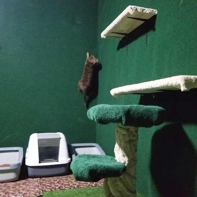 죽은 동생이 키우던 고양이 위해 '정글' 만들어준 남자