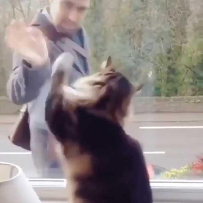 """""""출근?"""" 수고!"""", 행인한테 열정적으로 손 흔들어주는 고양이"""