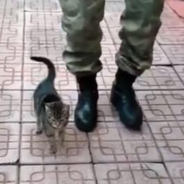 """""""왼발, 왼발"""", 병사 옆에서 발맞춰걷기 하는 고양이"""