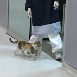 아픈 아깽이 입에 물고 '급히 인간 응급실' 찾아온 엄마 고양이