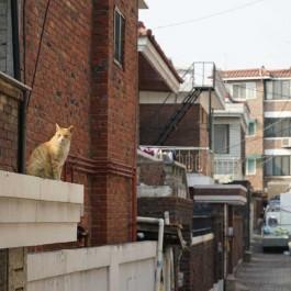 고양이 골목 - 야옹 ⑥