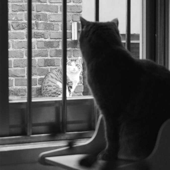 자유의지의 길고양이 Vs . 안락한 삶의 집고양이