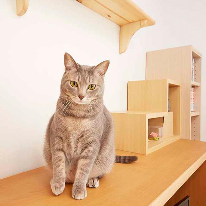 일본의 일곱 고양이가 사는 집