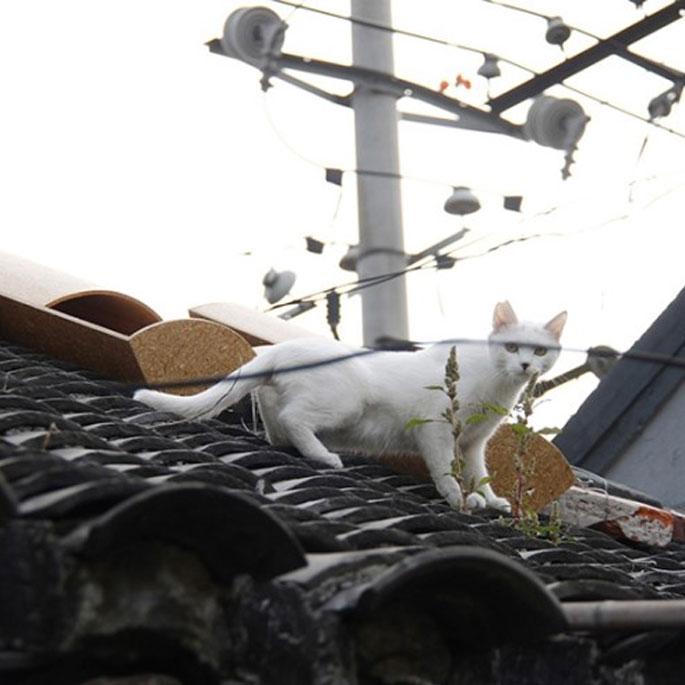 어느 중국 디자이너가 생각한 동네 고양이 집