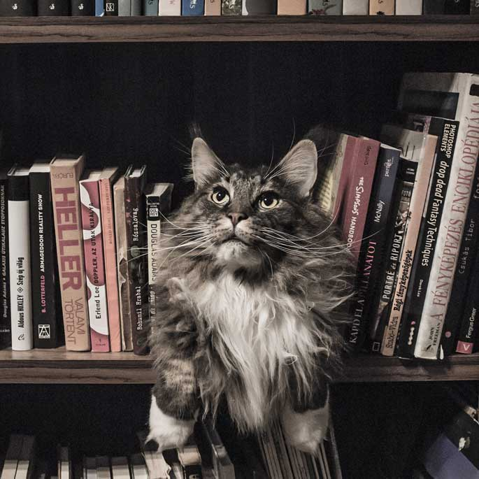 우리집은 고양이 친화적일까?