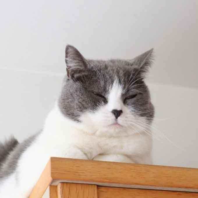 집안에서 고양이가 낮잠 자리로 선택하는 6곳과 그 특징