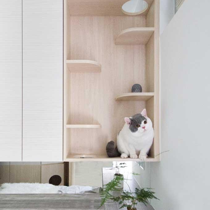 새와 고양이가 함께 사는 작은 집 인테리어