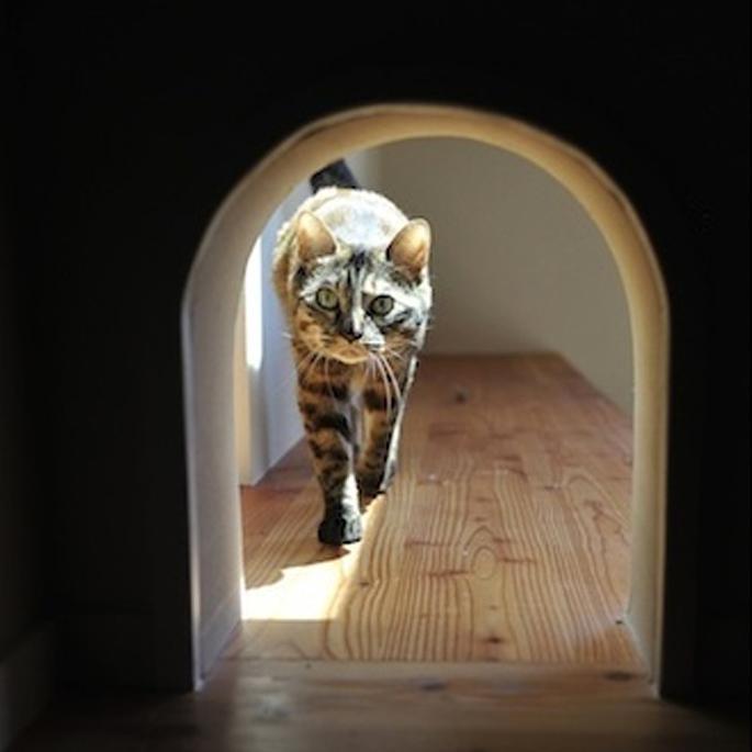 고양이의 이동성을 배려한 집