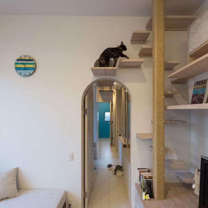 고양이 동선이 좋은 집