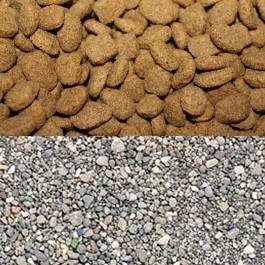 고양이는 처음이 중요! 집사들에게 가장 인기 있는 사료, 모래, 화장실을 알아보자