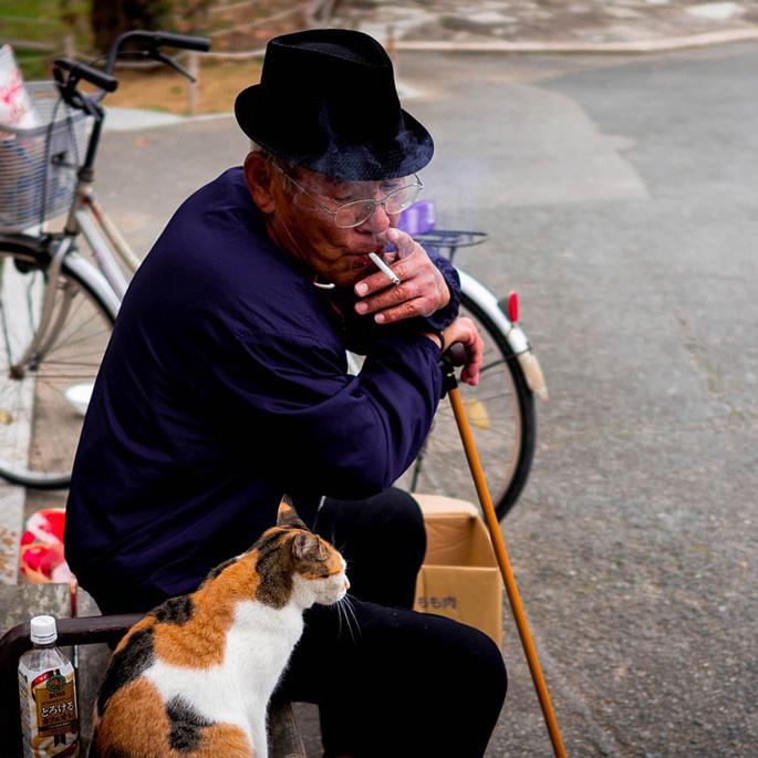 노령묘(老猫)의 마지막을 지켜주는 곳, 고양이 실버타운 '도쿄 펫 홈'