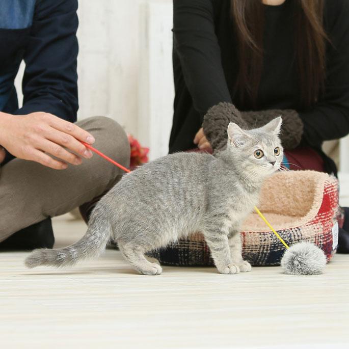 야생고양이, 귀여운 외모와 독립적 성격 덕에 반려묘 됐다