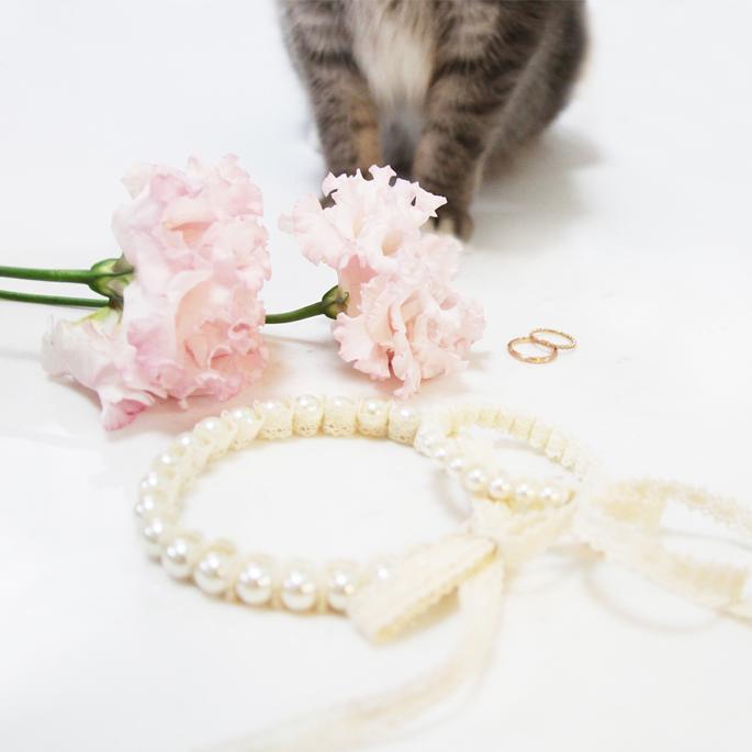 우리 결혼했어요, 일본의 '고양이 혼인 신고서'