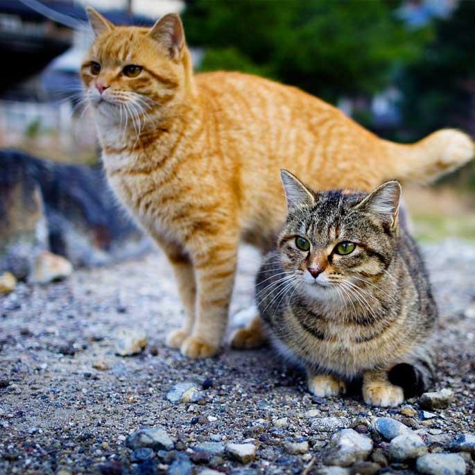 길고양이를 동네고양이로!  '네코데루'