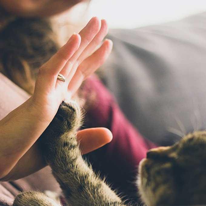 응답자 99%, 고양이 키워서 행복해졌다