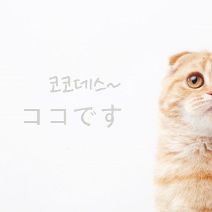 일본에서 가장 인기 있는 고양이 이름은 '코코'