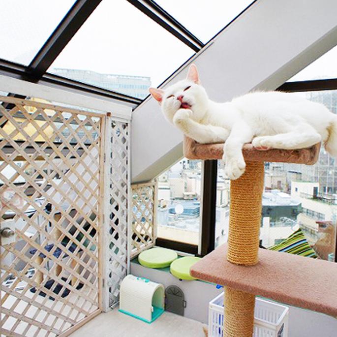 캣맘, 캣대디되면 아파트 빌려드려요! 도쿄 캣 가디언, 고양이 아파트 운영