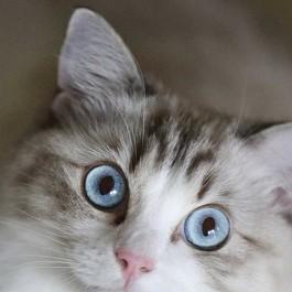 일본 집사들, 고양이 '눈 > 육구 > 털' 순으로 좋아해