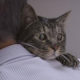 고양이는 결코 주인을 잊지 않는다