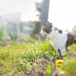 오늘 만난 길고양이는 몇살일까? '고양이 나이 알아보는 법'