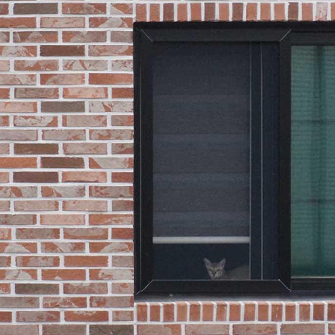 앞집 고양이
