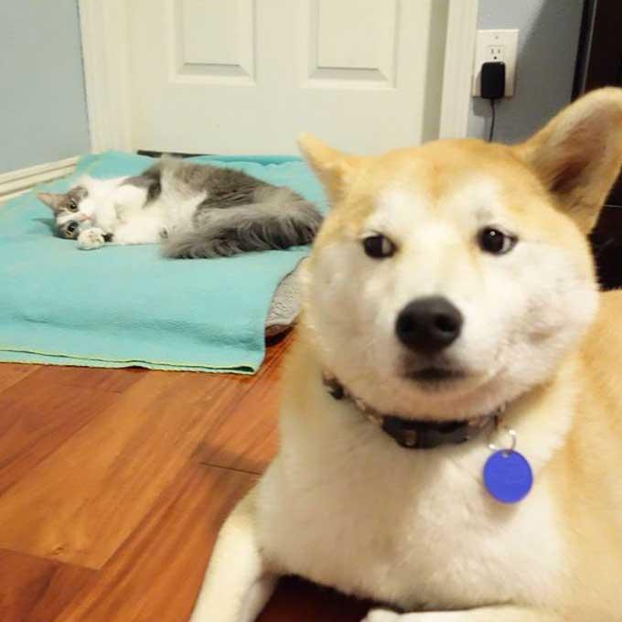 고양이에게 침대 빼앗긴 무기력한 개들 15