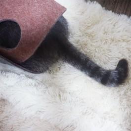 '놀겠다'는 강력한 의지의 고양이 꼬리