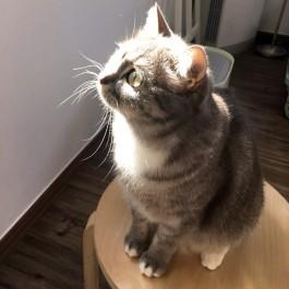 봄빛 고양이