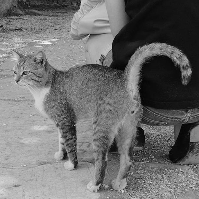 Q. 오래 밥 줘도 길고양이가 거리를 두는 까닭은