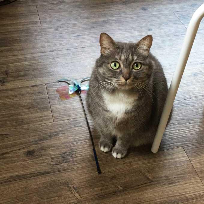 Q. 고양이가 집사 바로 앞에 앉을 때 마음 5