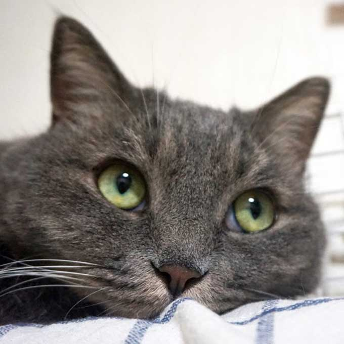 Q. 집고양이는 평소 어떤 기분으로 살까