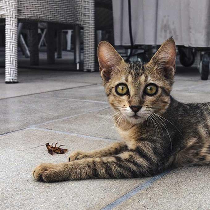 Q. 고양이를 키우면 바퀴벌레가 나오지 않는다긔?