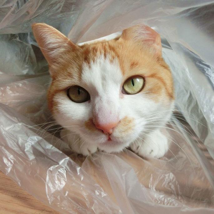 Q. 왜 자꾸 비닐을 씹을까?