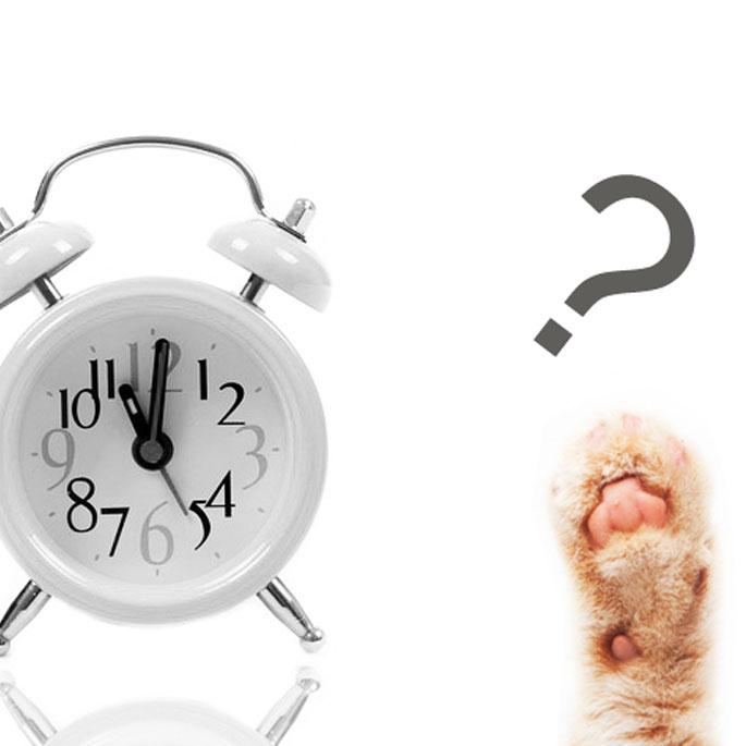 Q.  하루에 얼마나 놀아줘야할까?