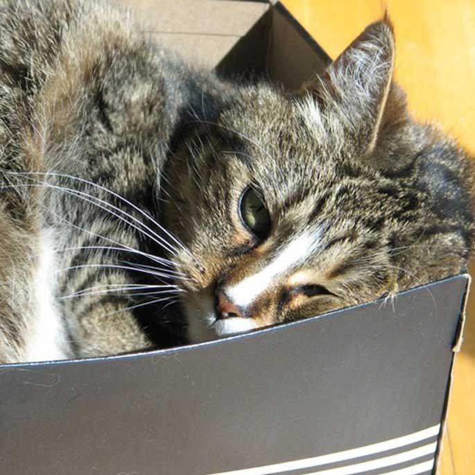 고양이가 작은 종이상자에 집착하는 까닭
