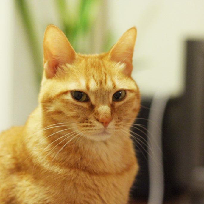 Q. 다른 고양이가 쓴 화장실, 쓰기 싫어할까?