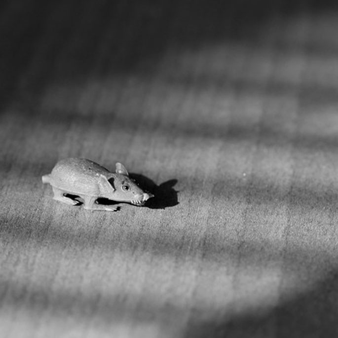 Q . 잡아온 '쥐'나 '새'는 정말 선물일까?