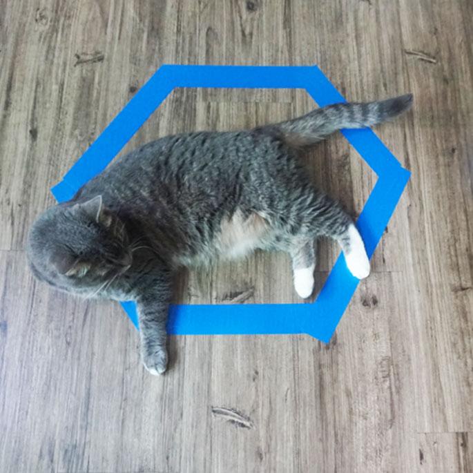 Q. 그 많은 고양이들은 왜 바닥에 그려 놓은 원 안에 들어갔을까?