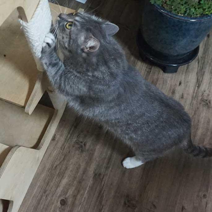 Q. 아깽이도 하는 발톱갈이, 고양이에게 스크래칭이란?
