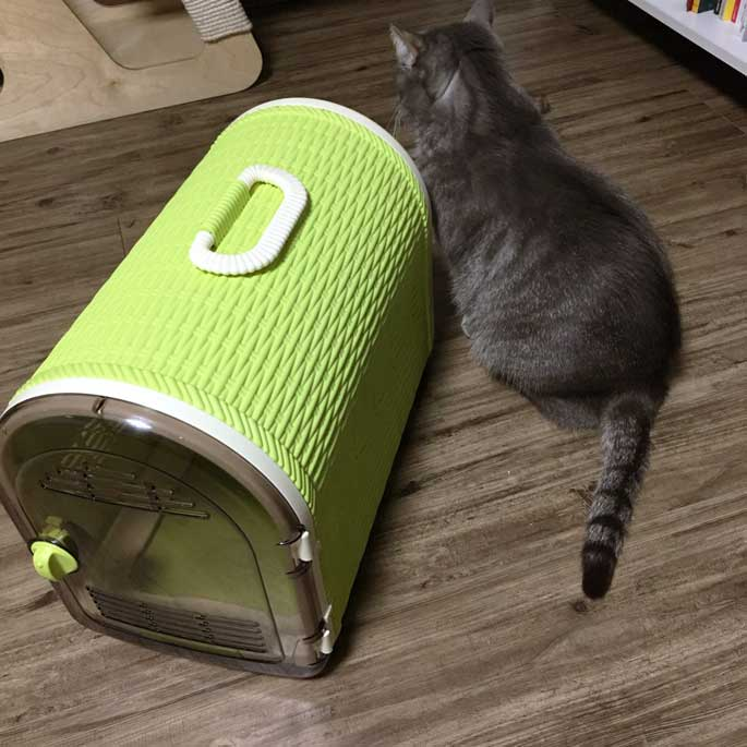 Q. 고양이가 이동장과 '반드시 친해져야' 하는 이유는?