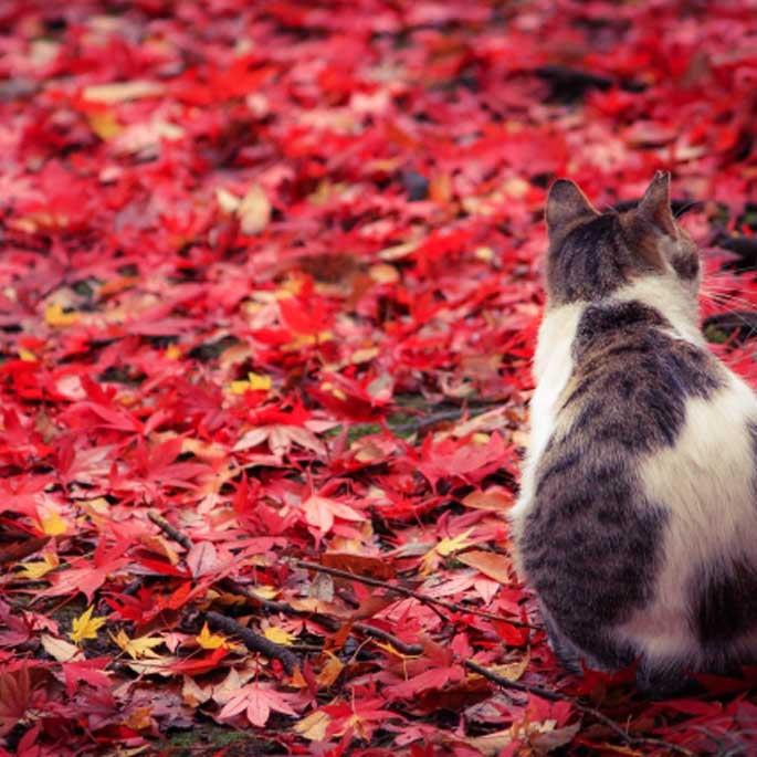 Q. 고양이는 얼마나 색을 구분할 수 있을까?