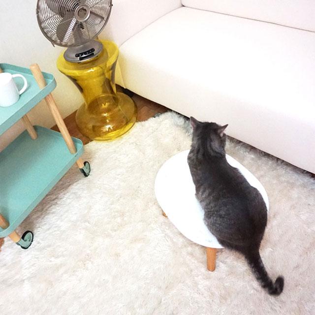 Q. 고양이도 선풍기 바람에 시원함을 느낄까?