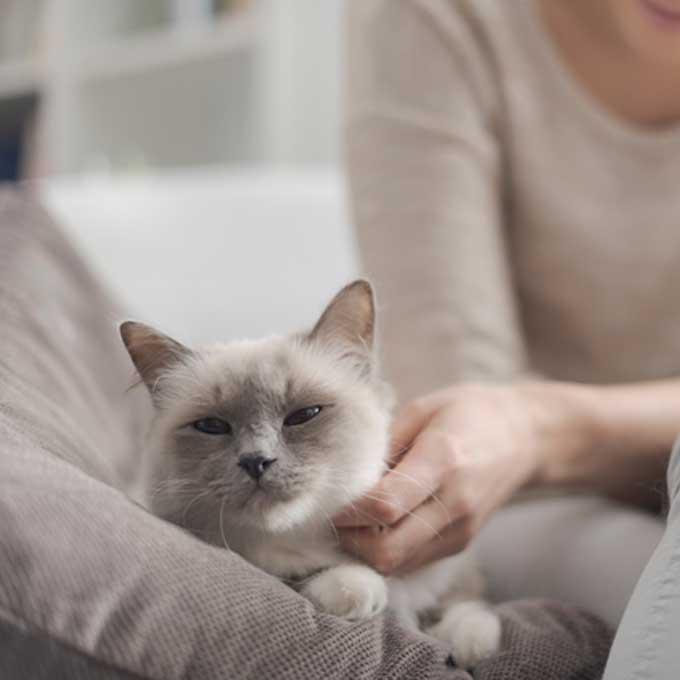고양이가 집사 곁을 떠나지 않을 때 마음 3